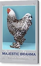Majestic Brahma Silver Spangled Acrylic Print