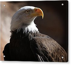 Majestic Eagle Acrylic Print by Marie Leslie