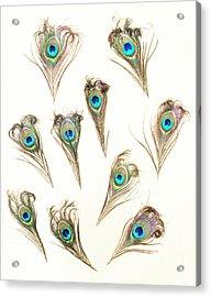 Majestic Feathers Acrylic Print