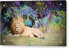 Majestic Lion Acrylic Print by Judy Kay