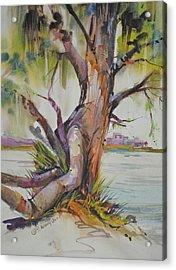 Majestic Live Oak  Acrylic Print