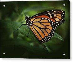 Majestic Monarch Acrylic Print