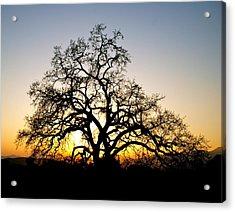 Majestic Oak Tree Sunset Acrylic Print