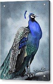 Majestic Peacock Acrylic Print