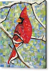 Majestic Red Cardinal  Acrylic Print