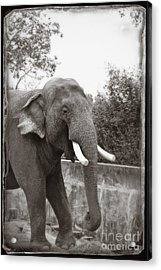 Acrylic Print featuring the photograph Majestic by Sandy Adams