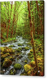 Acrylic Print featuring the photograph Majestic Stream by Tyra  OBryant