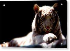 Majestic Tiger Acrylic Print