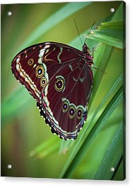 Acrylic Print featuring the photograph Majesty Of Nature by Karen Wiles