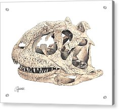 Majungasaur Skull Acrylic Print