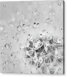Make A Wish For The Day Acrylic Print by Masako Metz