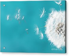 Make A Wish II Acrylic Print