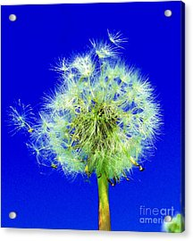 Acrylic Print featuring the digital art Make A Wish by Rodney Campbell