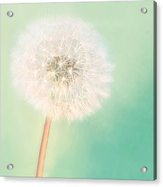 Make A Wish - Square Version Acrylic Print by Amy Tyler
