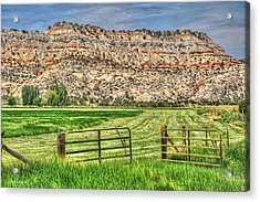 Make Hay While The Sun Shines Acrylic Print by Donna Kennedy