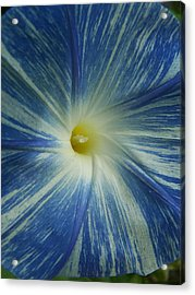 Make Mine Blue Acrylic Print by Sandy Collier