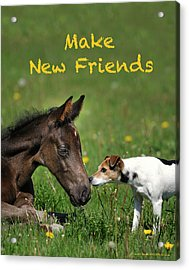 Make New Friends Acrylic Print