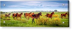Acrylic Print featuring the photograph Making A Diner Run by Melinda Ledsome