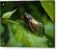 Acrylic Print featuring the photograph Making Eye Contact by Monte Stevens