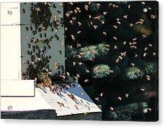 Making Honey - Landscape Acrylic Print