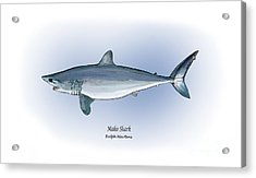 Mako Shark Acrylic Print by Ralph Martens