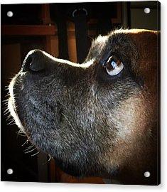 Malú, Boxer Dog, #juansilvaphotos Acrylic Print