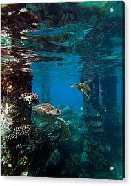 Mala Turtles Acrylic Print by James Roemmling