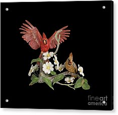 Male And Female Cardinals  Acrylic Print