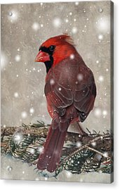 Acrylic Print featuring the photograph Male Cardinal In Snow #1 by Patti Deters