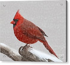 Acrylic Print featuring the painting Male Cardinal In Snow by Rand Herron