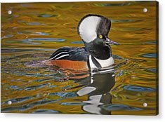 Acrylic Print featuring the photograph Male Hooded Merganser Duck by Susan Candelario