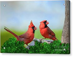 Male Northern Cardinals In Spring Acrylic Print by Bonnie Barry