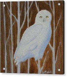 Male Snowy Owl Portrait Acrylic Print