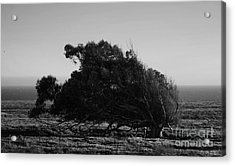 Acrylic Print featuring the photograph Malformed Treeline by Clayton Bruster