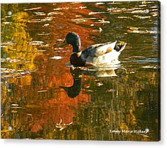 Mallard Duck In The Fall Acrylic Print