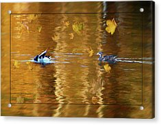 Mallard Ducks On Magnolia Pond - Painted Acrylic Print