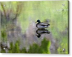 Acrylic Print featuring the photograph Mallard In Mountain Water by Mark Myhaver