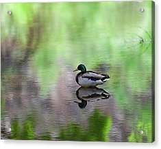Acrylic Print featuring the photograph Mallard In Reflecting Pool H58 by Mark Myhaver