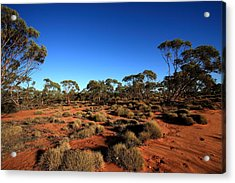 Mallee And Spinifex Acrylic Print by Tony Brown