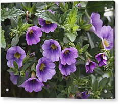 Mallow Acrylic Print by Larry Capra