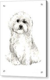 Maltese Abstract Dog Poster Acrylic Print