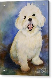 Maltese Named Ben Acrylic Print by Marilyn Jacobson