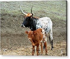 Mama And Baby Longhorn Painting 2 Acrylic Print by Barbara Snyder
