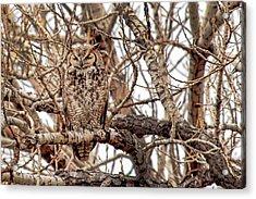 Mama Owl In Camo Acrylic Print