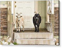 The Goat Guard Acrylic Print