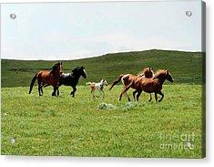 Mama's Little Foal Acrylic Print