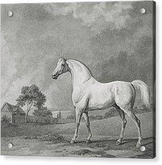 Mambrino Acrylic Print by George Stubbs