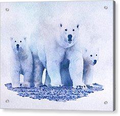 Mamma Bear  Acrylic Print