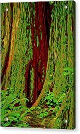 Mammoth Ancient Cedars Acrylic Print