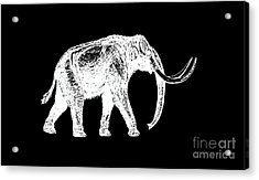 Mammoth White Ink Tee Acrylic Print by Edward Fielding